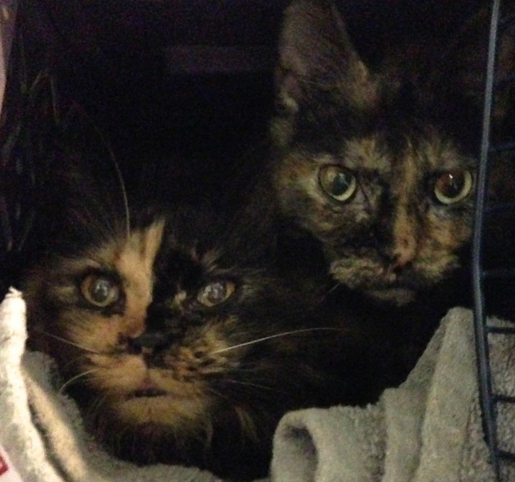 Lucy (left) and Lily were too shy to come out of their carrier at first